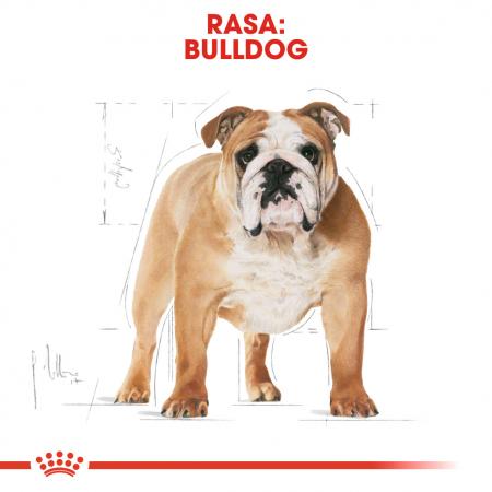 Royal Canin Bulldog Adult hrana uscata caine1