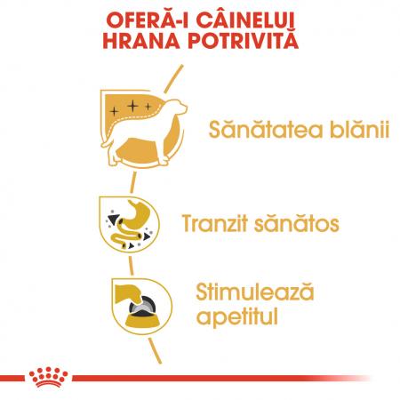Royal Canin Chihuahua Adult hrana umeda caine3