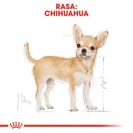 Royal Canin Chihuahua Adult hrana umeda caine1