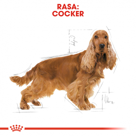 Royal Canin COCKER Adult Hrana Uscata Caine1
