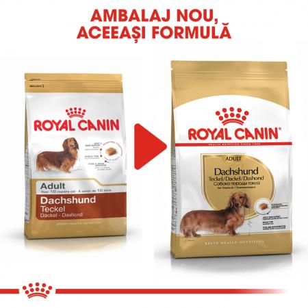 Royal Canin DACHSHUND Adult Hrana Uscata Caine4