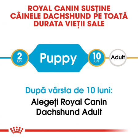 Royal Canin Dachshund Puppy hrana uscata caine junior Teckel, 1.5 kg1