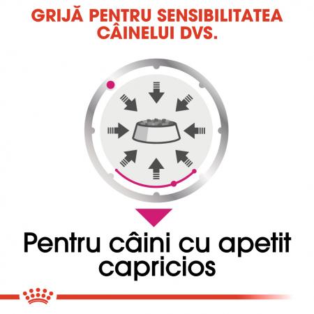 Royal Canin Exigent Adult hrana umeda caine, apetit capricios (pate), 12 x 85 g [3]