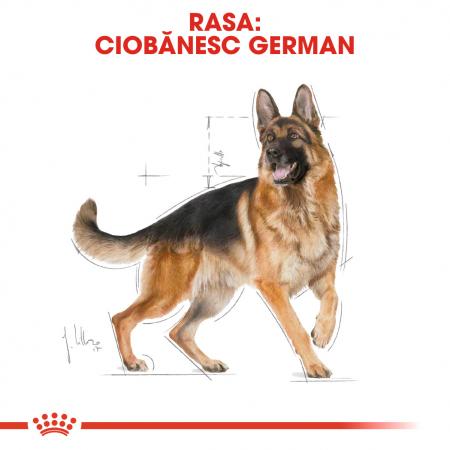 Royal Canin German Shepherd Adult hrana uscata caine Ciobanesc German1