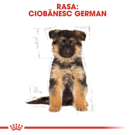 Royal Canin GERMAN SHEPHERD Puppy Hrana Uscata Caine4