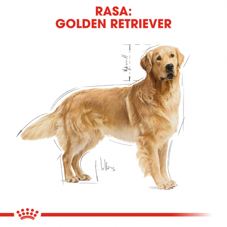 Royal Canin Golden Retriever Adult hrana uscata caine1