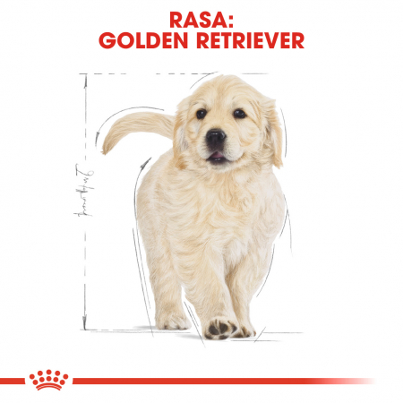 Royal Canin Golden Retriever Puppy hrana uscata caine junior4