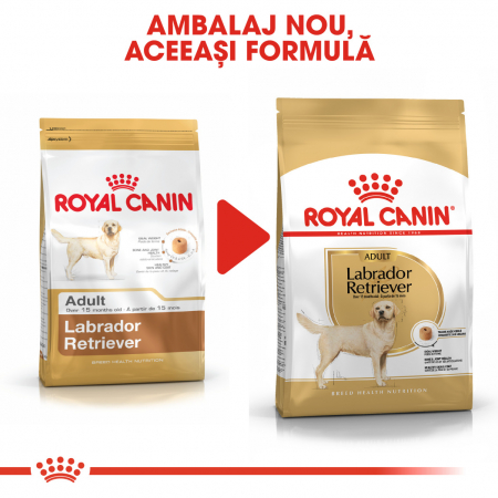 Royal Canin LABRADOR RETRIEVER Adult Hrana Uscata Caine4