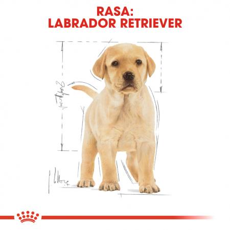 Royal Canin Labrador Puppy hrana uscata caine junior, 12 kg [4]