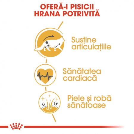 Royal Canin MAINE COON Adult Hrana Uscata Pisica4