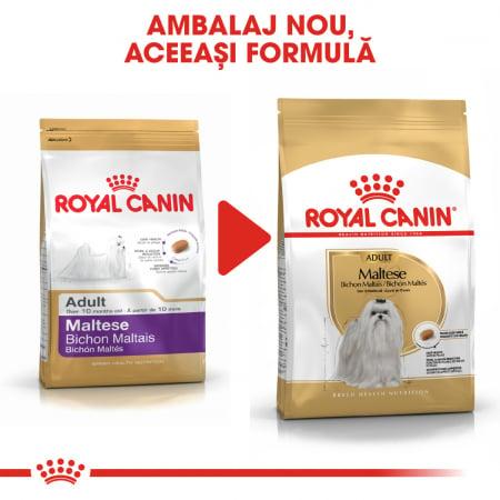 Royal Canin Maltese Adult hrana uscata caine4