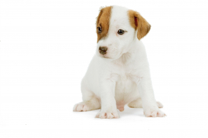 Royal Canin MATURE 8+ Hrana Umeda Caine1
