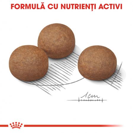 Royal Canin Maxi Digestive Care Hrana Uscata Caine3