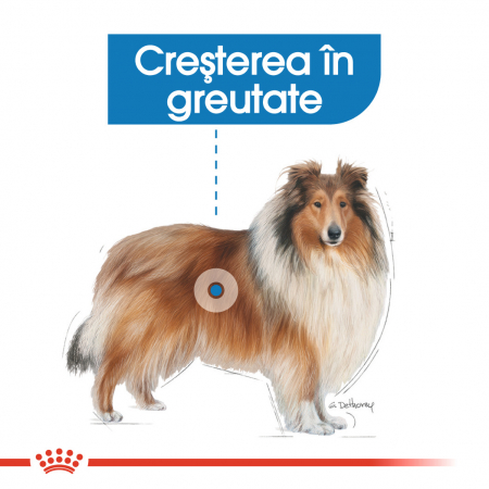 Royal Canin Maxi Light Weight Care Adult hrana uscata caine, limitarea cresterii in greutate [2]