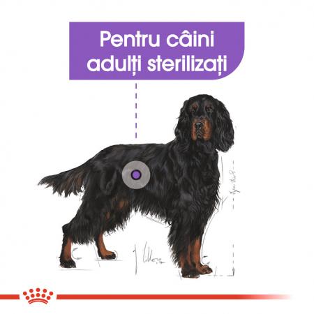 Royal Canin MAXI STERILISED Hrana Uscata Caine2