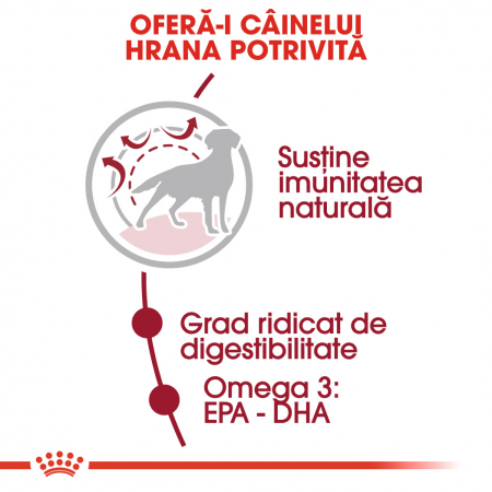 Royal Canin MEDIUM Adult Hrana Uscata Caine2