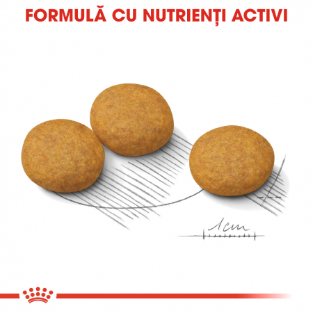 Royal Canin Medium Dermacomfort Hrana Uscata Caine4