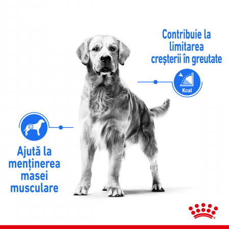Royal Canin MEDIUM LIGHT WEIGHT CARE Hrana Uscata Caine2