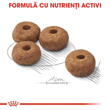 Royal Canin Medium sterilised Hrana Uscata Caine4