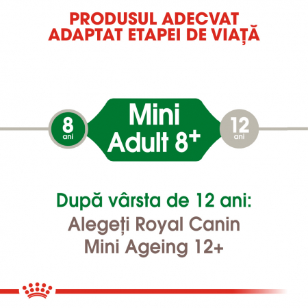 Royal Canin Mini Adult 8+ hrana uscata caine senior1