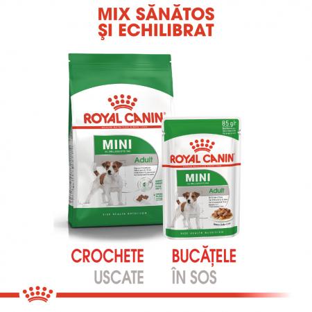 Royal Canin Mini Adult hrana umeda caine1