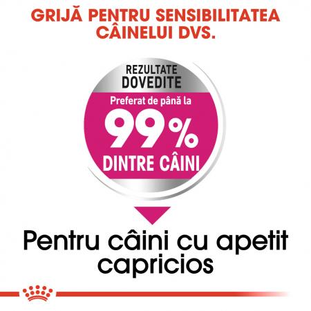Royal Canin Mini Exigent Hrana Uscata Caine3
