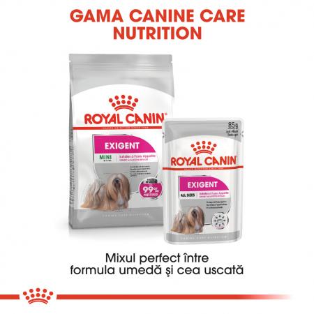 Royal Canin Mini Exigent Hrana Uscata Caine5