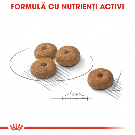 Royal Canin Mini Sterilised Hrana Uscata Caine4
