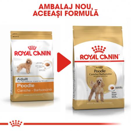 Royal Canin POODLE Adult Hrana Uscata Caine2