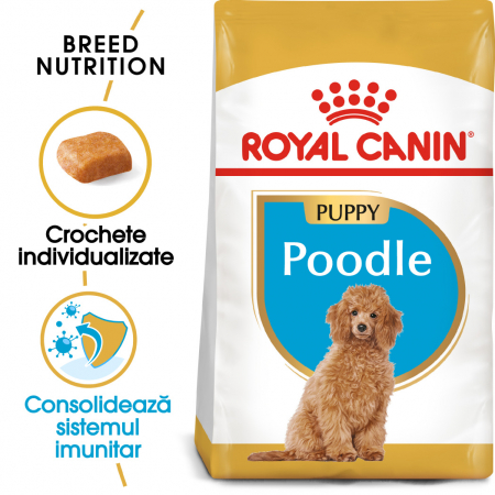 Royal Canin POODLE Puppy Hrana Uscata Caine0
