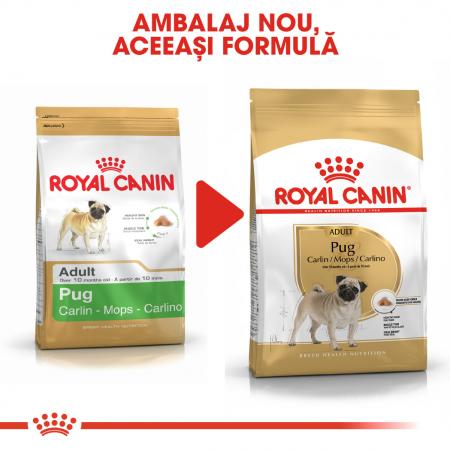 Royal Canin PUG Adult Hrana Uscata Caine4