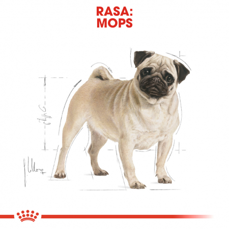 Royal Canin PUG Adult Hrana Uscata Caine1