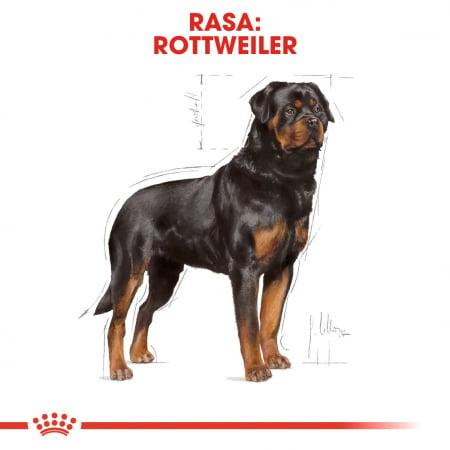 Royal Canin ROTTWEILER Adult Hrana Uscata Caine1