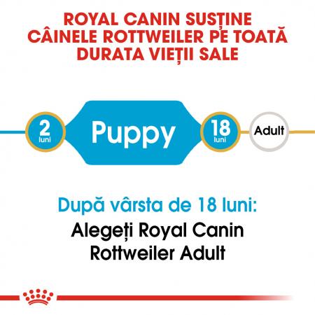 Royal Canin ROTTWEILER Puppy Hrana Uscata Caine1