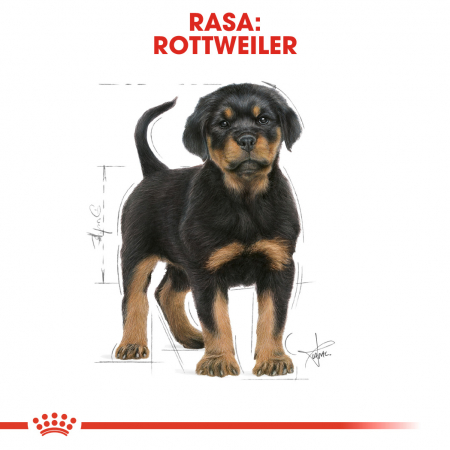 Royal Canin ROTTWEILER Puppy Hrana Uscata Caine4