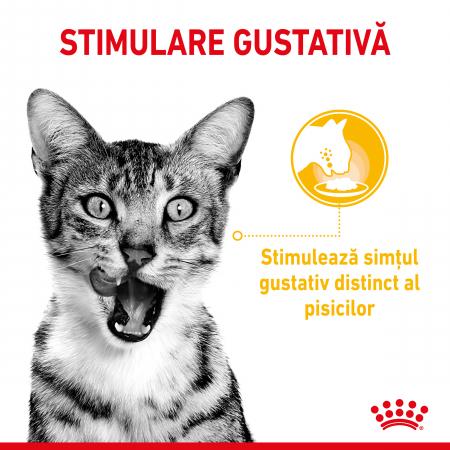 Royal Canin Sensory Taste, hrana umeda pisici, stimularea gustului (in sos), 12 x 85 g [3]