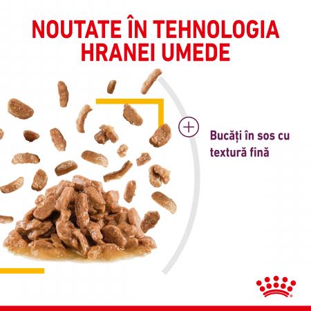 Royal Canin Sensory Taste, hrana umeda pisici, stimularea gustului (in sos), 12 x 85 g [5]