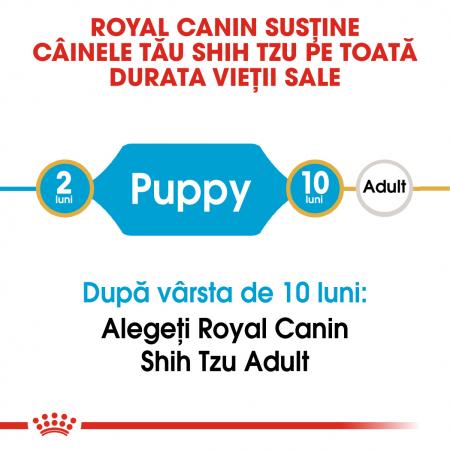 Royal Canin SHIH TZU Puppy Hrana Uscata Caine1