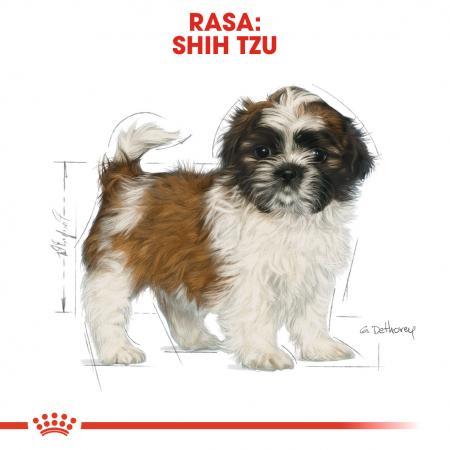 Royal Canin SHIH TZU Puppy Hrana Uscata Caine4