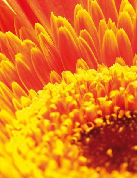 B+W filtru Close-up +4 58mm 6