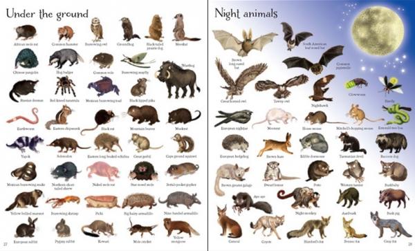 1000 animals [1]