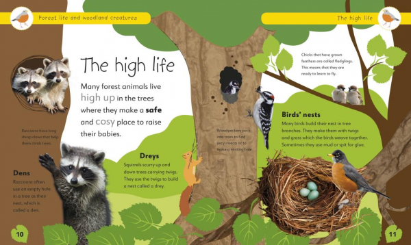 Forest Life and Woodland Creatures 1