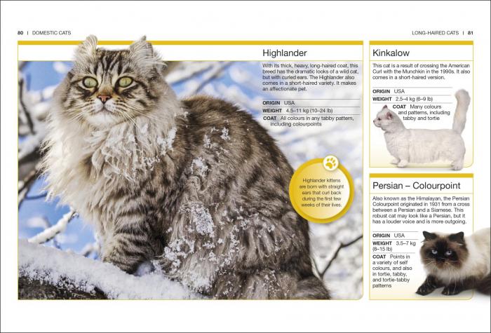 Pocket Eyewitness Cats 2
