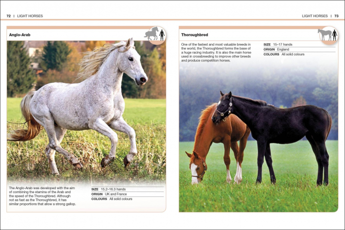 Pocket Eyewitness Horses 2
