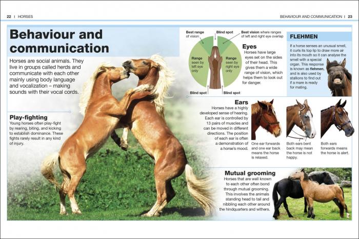 Pocket Eyewitness Horses 1