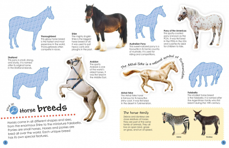 Horses and Ponies Ultimate Sticker Book1