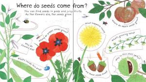 How do flowers grow Carte cu clapete despre plante2