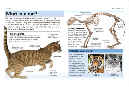 Pocket Eyewitness Cats1