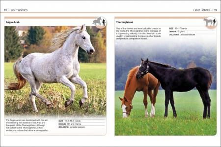 Pocket Eyewitness Horses2