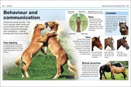 Pocket Eyewitness Horses1